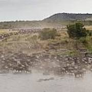 Wildebeest, Kenya, Africa Poster