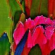 Protea Blossom Poster