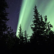 Aurora Borealis Above The Trees Poster