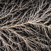 Electrical Discharge Lichtenberg Figure Poster by Ted Kinsman