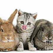 Kitten And Rabbits Poster