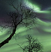 Northern Lights In The Arctic Poster