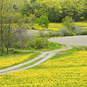 Spring Farm Landscape With Dandelion Bloom In Maine Poster