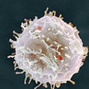 Stem Cell, Sem Poster