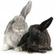 Two Rabbits Poster