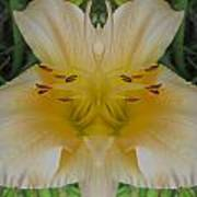 Angelic Lily Poster