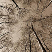 Epping Forest Trees Poster