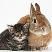 Rabbit And Kitten Poster