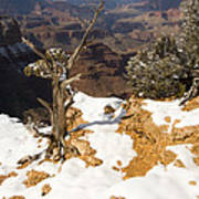 Winter Time On The South Rim Poster
