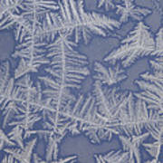 Frost On A Window Poster