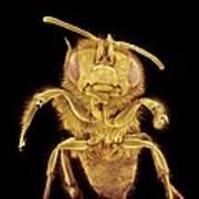 Honey Bee, Sem Poster