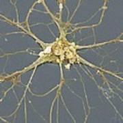 Nerve Cell, Sem Poster