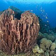 A Barrel Sponge Attached To A Reef Poster