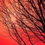 A Black Winter Tree On Red Poster