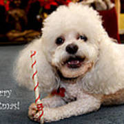 A Candycane For Puppy Poster