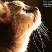 A Cat Prayer Poster