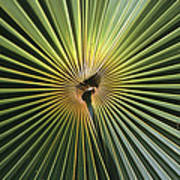 A Close View Of A Palm Frond Poster