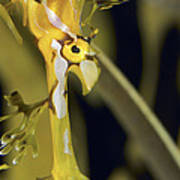 A Delicate Leafy Sea Dragon Head Detail Poster