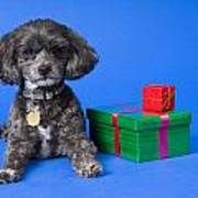 A Dog With Some Gifts Poster