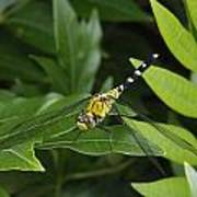 A Dragonfly Resting On A Leaf Poster by George Grall