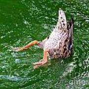 A Ducking Duck Poster