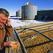 A Farmer Runs His Corn Through His Hand Poster by Joel Sartore