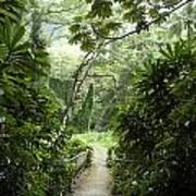 A Flooded Path At Manoa Falls Poster