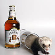 A Glass Of Fursty Ferret Poster