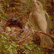 A Greenfinch At Its Nest Poster
