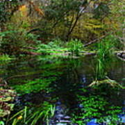 A Hint Of Fall At Ichnetucknee Springs Poster