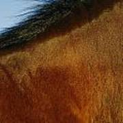 A Horses Neck And Mane, Seen So Close Poster
