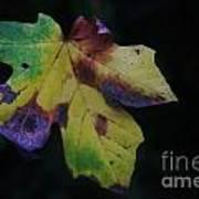 A Leaf Left Black And Blue  Poster