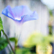 A Little Blue Poster by Darren Fisher