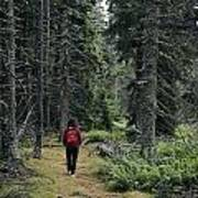 A Lone Hiker Enjoys A Wooded Trail Poster