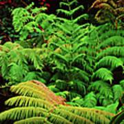 A Mass Of Ferns Poster