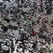 A Mob Of Red-winged Blackbirds Poster