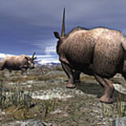 A Pair Of Male Elasmotherium Confront Poster