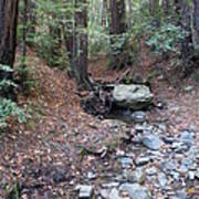 A Peaceful Redwood Creek On Mt Tamalpais Poster