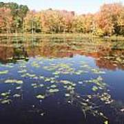 A Pond Of Reflective Beauty Poster