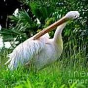 A Preening Stork Poster