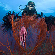 A Red Sea Fan With Sponge Colored Clam Poster