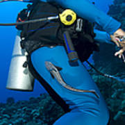 A Remora Attached To A Diver, Kimbe Poster