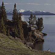 A Scenic View Of Yellowstone Lake Poster