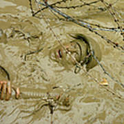 A Seabee Emerges From Muddy Water Poster by Stocktrek Images