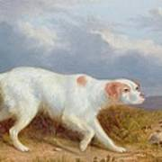 A Setter On The Moor Poster by Philip Reinagle