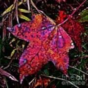 A Single Sweetgum Leaf Poster