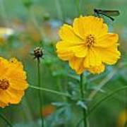 A Small Dragon Fly Sitting On A Yellow Flower Poster