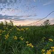 A Summer Evening Sky With Yellow Tansy Poster
