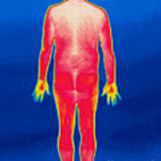 A Thermogram Of A Nude Man Back Poster