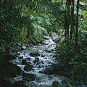 A View Of A Tropical Stream In El Poster